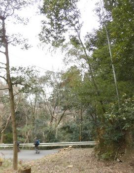 イノシシ被害で猟師がいた先週 4-5月中迄山入り禁止511x657.jpg