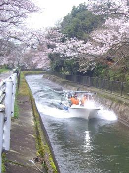 疏水観光船Apr7日505x674.jpg